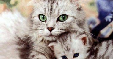 кошка-с-котятами-1